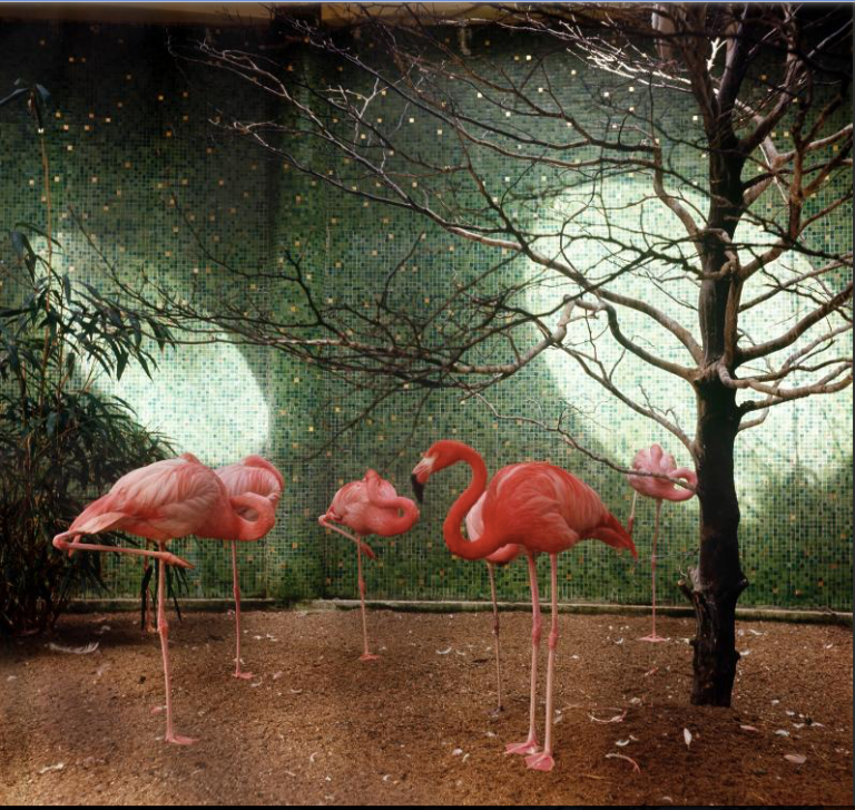 flamingos-in-zoo-rotterdam-1965