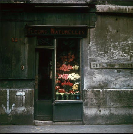 Flower Shop, Paris, (ca. 1950-1960)