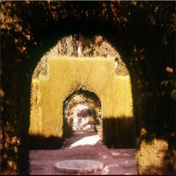 Glimpse by hedge garden (1950-1960)
