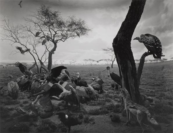 595_hyena-jackal_vulture_1976_gelatin_silver_print_c_hiroshi_sugimoto