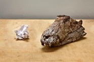 80-million-years