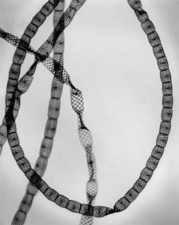 Carl Strüwe Alga-Freshwater (Alge Spirogyra setiformis), 1928 Gelatin silver print 24h x 18.01w cm