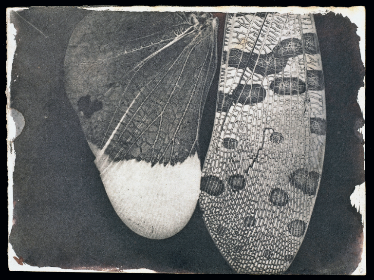insect-wings-c-1840-william-henry-fox-talbot