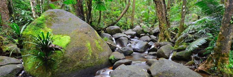 save-the-daintree-stream.jpg