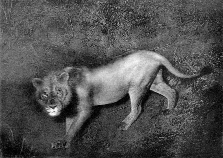 cherry-kearton-lion-with-flash-1909