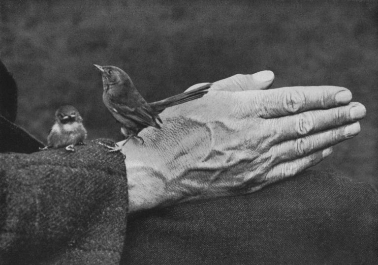 dartford-warbler-and-chick-on-richard-keartons-hand