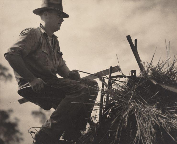 keast-burke-new-zealand-australia-1896-1974-mulga-oats