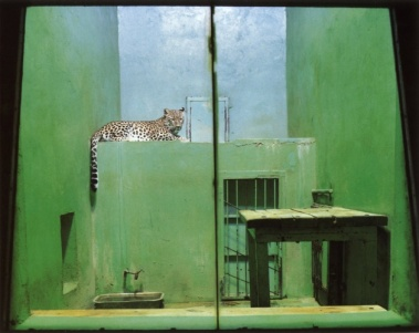 Volker Seding (1992) Leopard, Slovakia