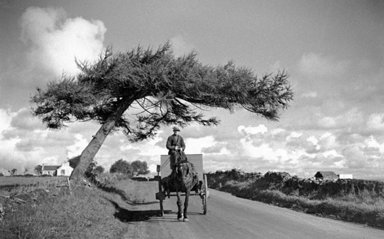 man-on-cart-under-tree-frenchpark-co-roscommon-october-1934
