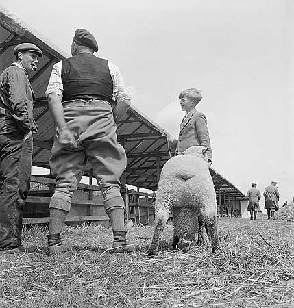 men-in-conversation-by-the-stalls-at-the-royal-show-bristol-as-a-boy-and-a-sheep-look-on-july-1958