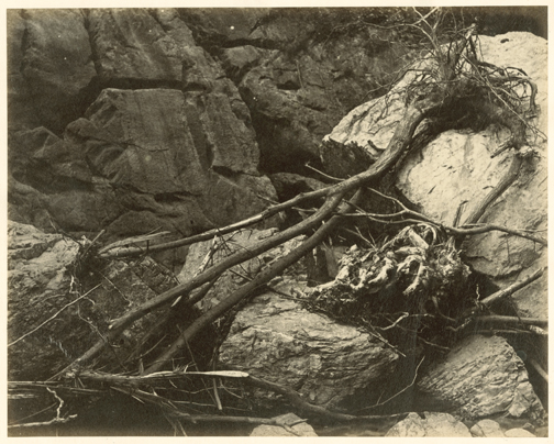 hugh-owen-branches-and-roots-in-dry-riverbed-negative-before-1855-print-1860s-1870s-albumen-print-from-a-paper-negative-17-2-x-21-5-cm