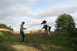 johnny-walks-his-horse-in-a-field-on-the-backroads-of-county-carlow