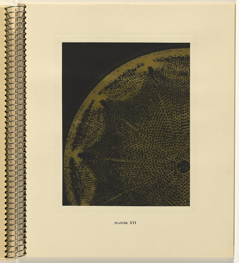 laure-albin-guillot-diatomee-in-micrographie-decorative