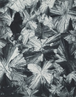 laure-albin-guillot-irional-1931