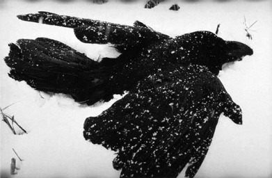 Fukase Masahisa (1980s) from The Solitude of Ravens.