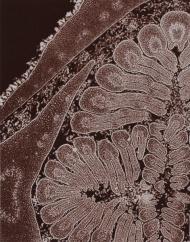 micrographie-decorative-laure-albin-guillot-4