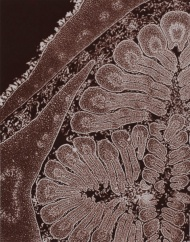 micrographie-decorative-laure-albin-guillot-4