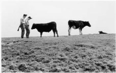 Fay Godwin (1973) Soldiers and bullocks, Romney Marsh.