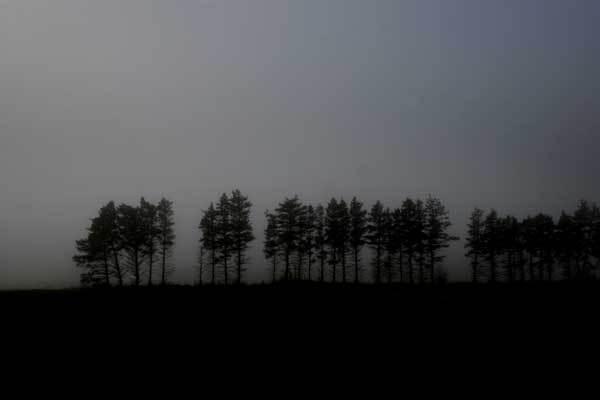 carsteningemannforest
