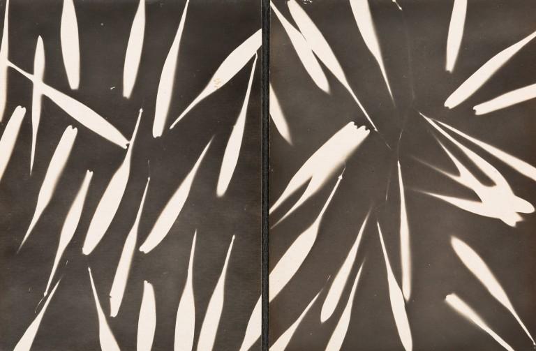 circa 1920 silver print 11 x 17 cm