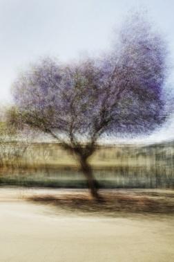 Jacob Gils (2016) LA #3, C-print 240x160cm