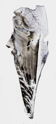 Ryan Tews (n.d.) Mussel shell, 'scanograph'