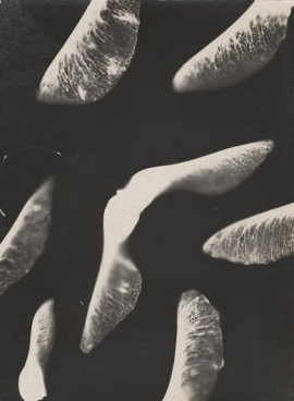 Mikhail Tarkhanov (1920s) Untitled, Gelatin silver print 4 ½ x 3 3:8 in.
