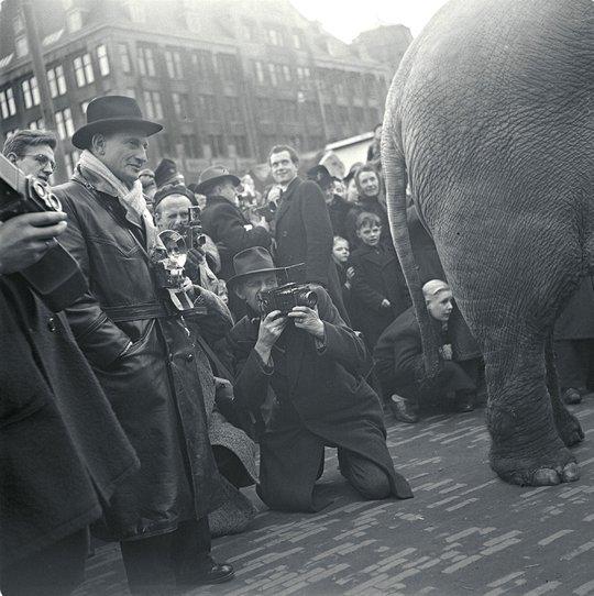 Olifant van Circus Strassburger wordt op de Dam gefotografeerd, Amsterdam 1948