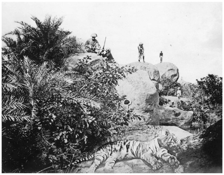Willoughby Wallace Hooper (1870s or 1880s) staged tiger hunt with dead tiger in foreground.