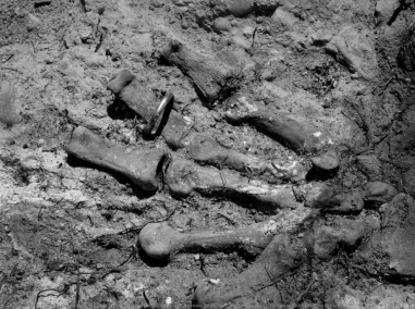 Screen Shot 2017-05-09 at 9.12.08 pm