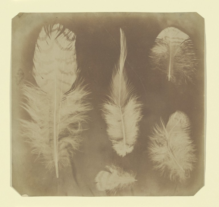 Nevil Story Maskelyne (British, 1823–1911) Date-ca. 1840 Medium-Salted paper print Dimensions-Image- 7 5:16 × 7 5:8 in. (18.6 × 19.3 cm), irregularly trimmed Classification-Negatives