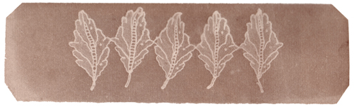 Nevil Story-Maskelyne, Leaves of Lace, circa 1840, photogenic drawing negative, 5.0 x 17.0 cm