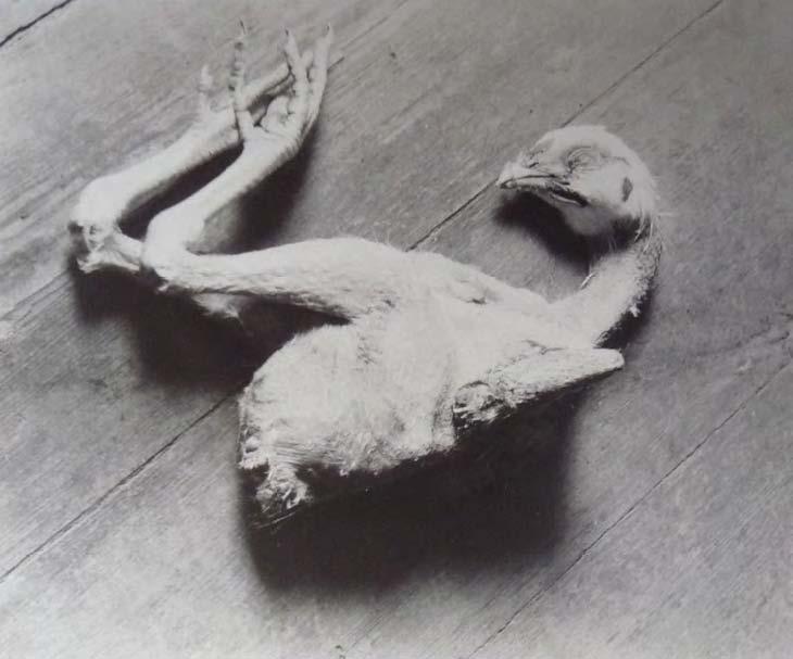 Alice Lex-Nerlinger,,Totes Huhn, um 1928, Werkverzeichnis- FO:8