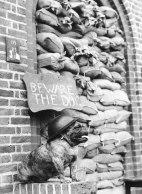 bewaredog