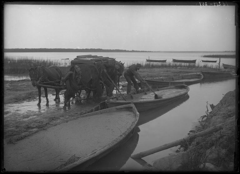Alluvial (mud) carriers Kuressaare Suurlaht edge.