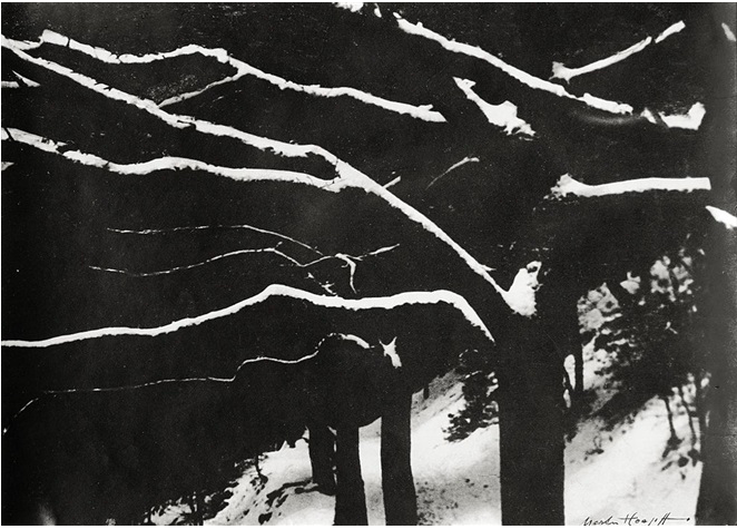 Marta Hoepffner (1934) Branches in the snow, gelatin silver print, 16,9 x 23,5 cm