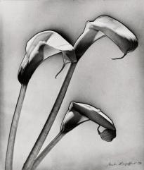 Marta Hoepffner (1938) Calla Lilly