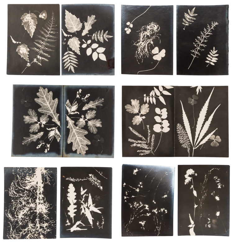 10 botanical photograms