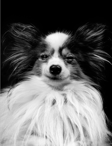 Walter Schels, from the series 'Dogs' © Walter Schels