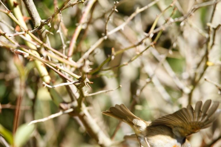 Ein auf Helgoland fotografierter Vogel, den ich nicht bestimmen kann
