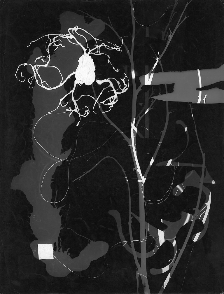 Roger Catherineau, Photogramme , 1959 Vintage gelatin silver print, 15 3:4 x 11 7:8 in. (40 x 30.2 cm)