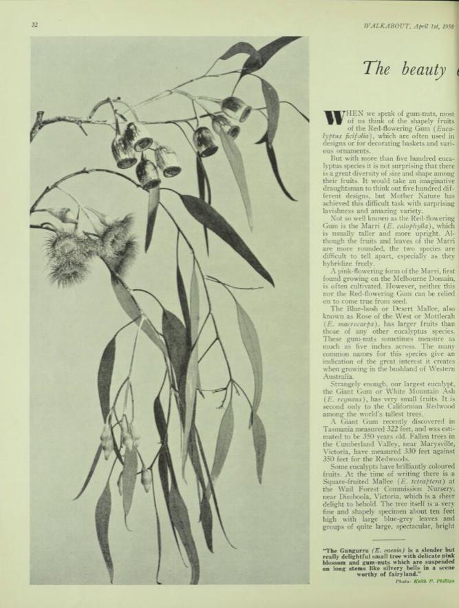 Walkabout.Vol. 24 No. 4 April 1958 p34