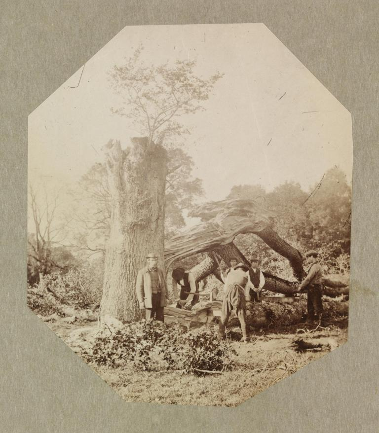 Photograph Place of origin: ireland (made) Date: c.1858-1861 (made) Artist:Maker: Hawarden, Clementina Viscountess, born 1822 - died 1865 (artist) Materials and Techniques: Albumen print Museum number: 457:31-1968
