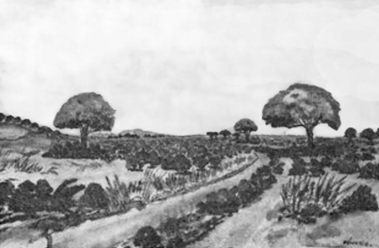 Bamara Landscape