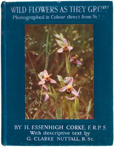 Henry Essenhigh Corke Wildflowers