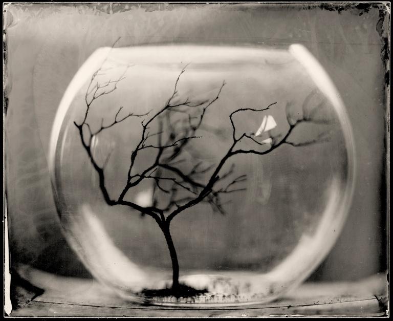 Bowl treecatalogue