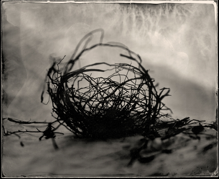 Nest catalogue
