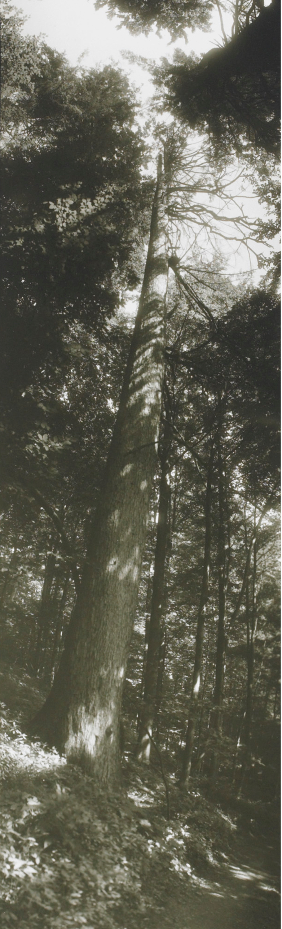 229_1_living_contemporary_april_2011_josef_sudek_vertical_panorama_with_tree__wright_auction